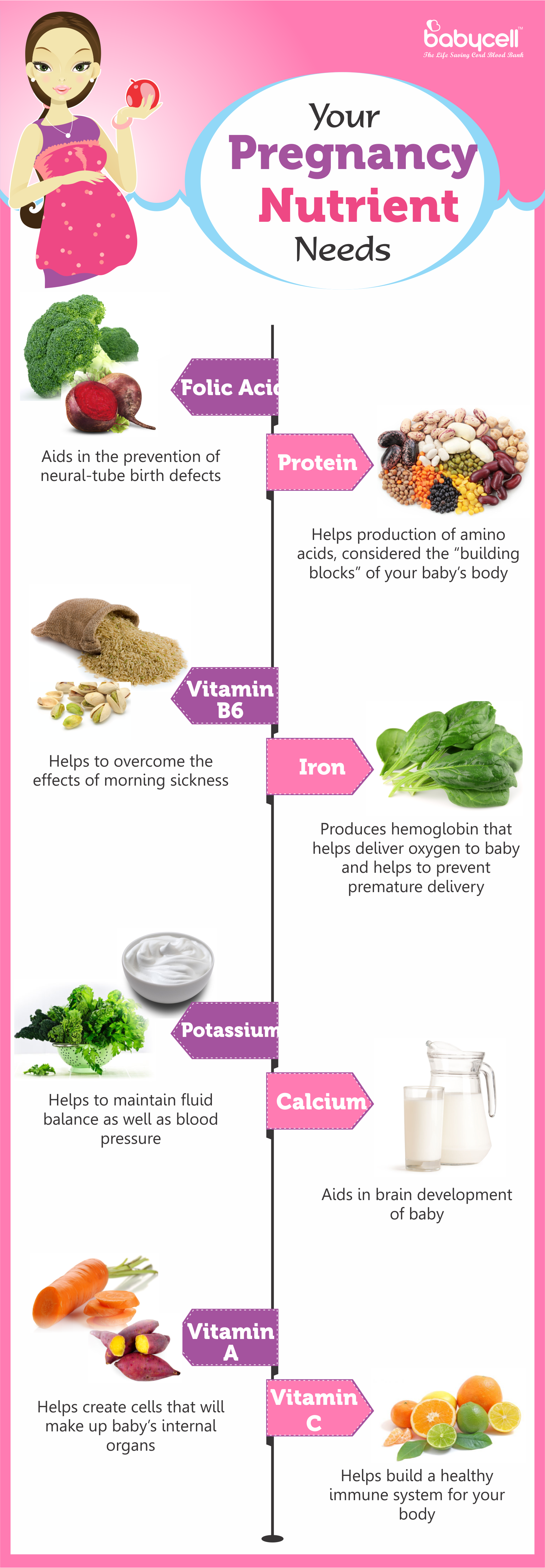 Pregnancy Nutrient Needs